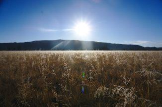 bechler_meadow
